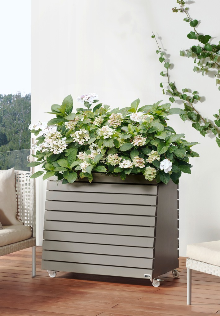 urban gardening auf balkon terrasse co foto firmenpresse. Black Bedroom Furniture Sets. Home Design Ideas